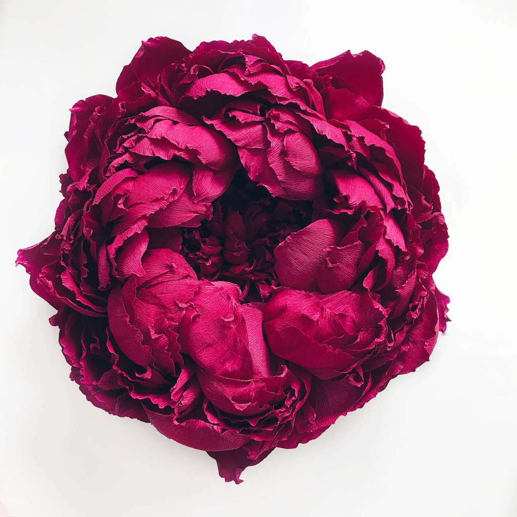 "DIY tutorial ""Peony 2.0 from crepe paper"""