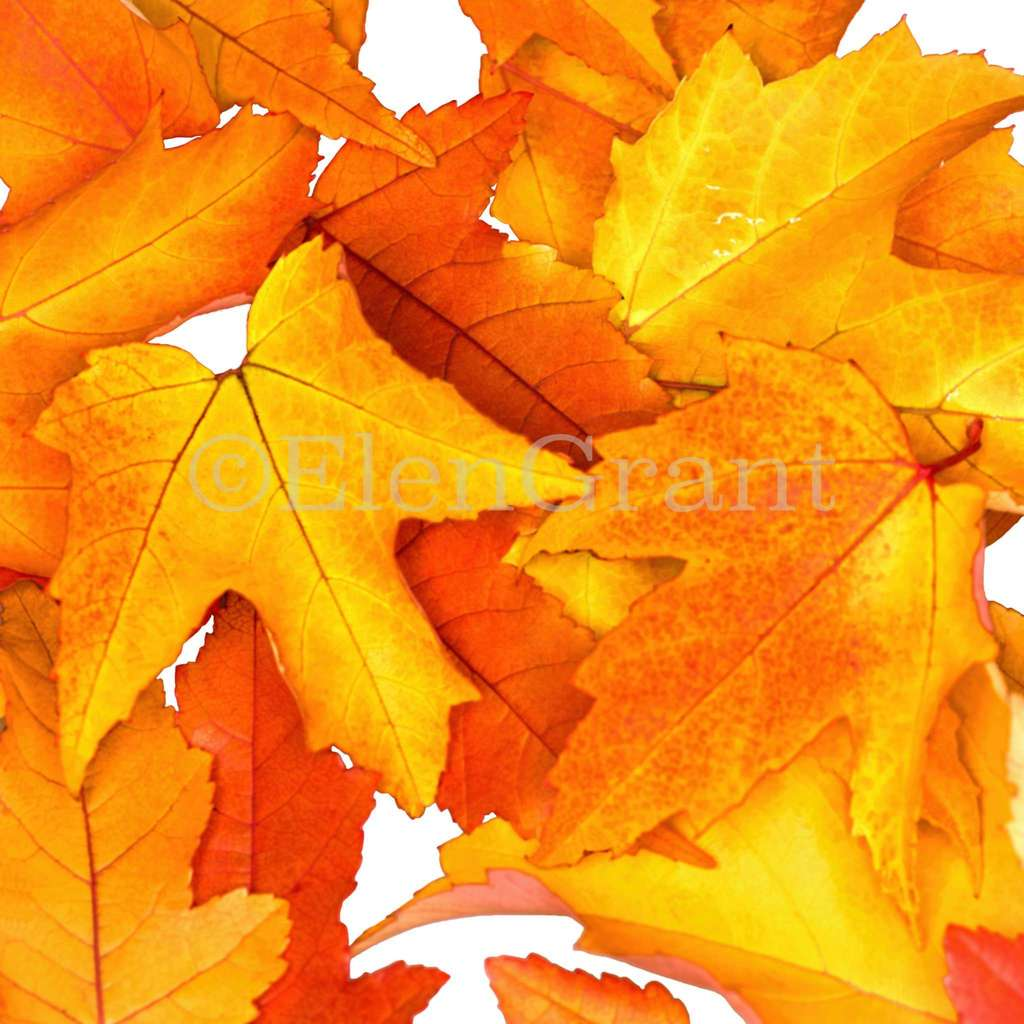 Autumn leaves square background