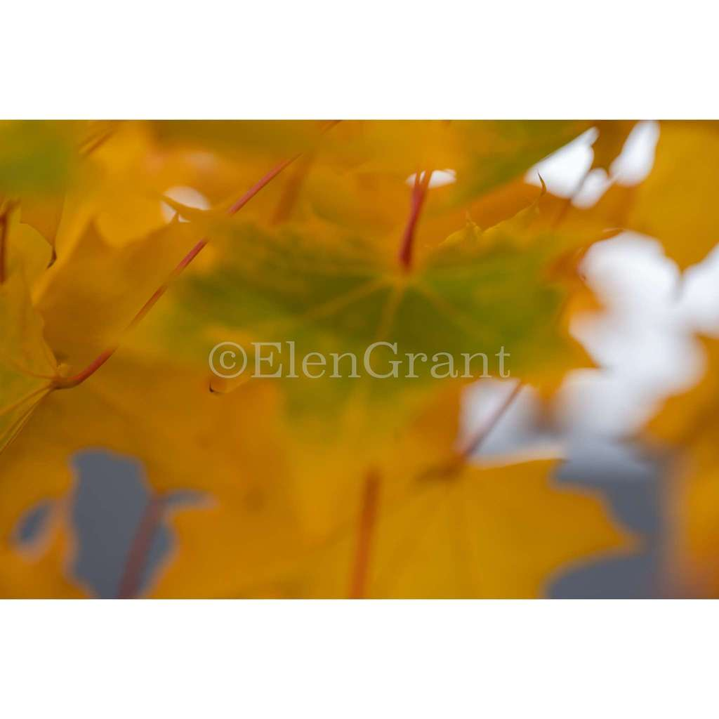 Soft focus fall leaves background