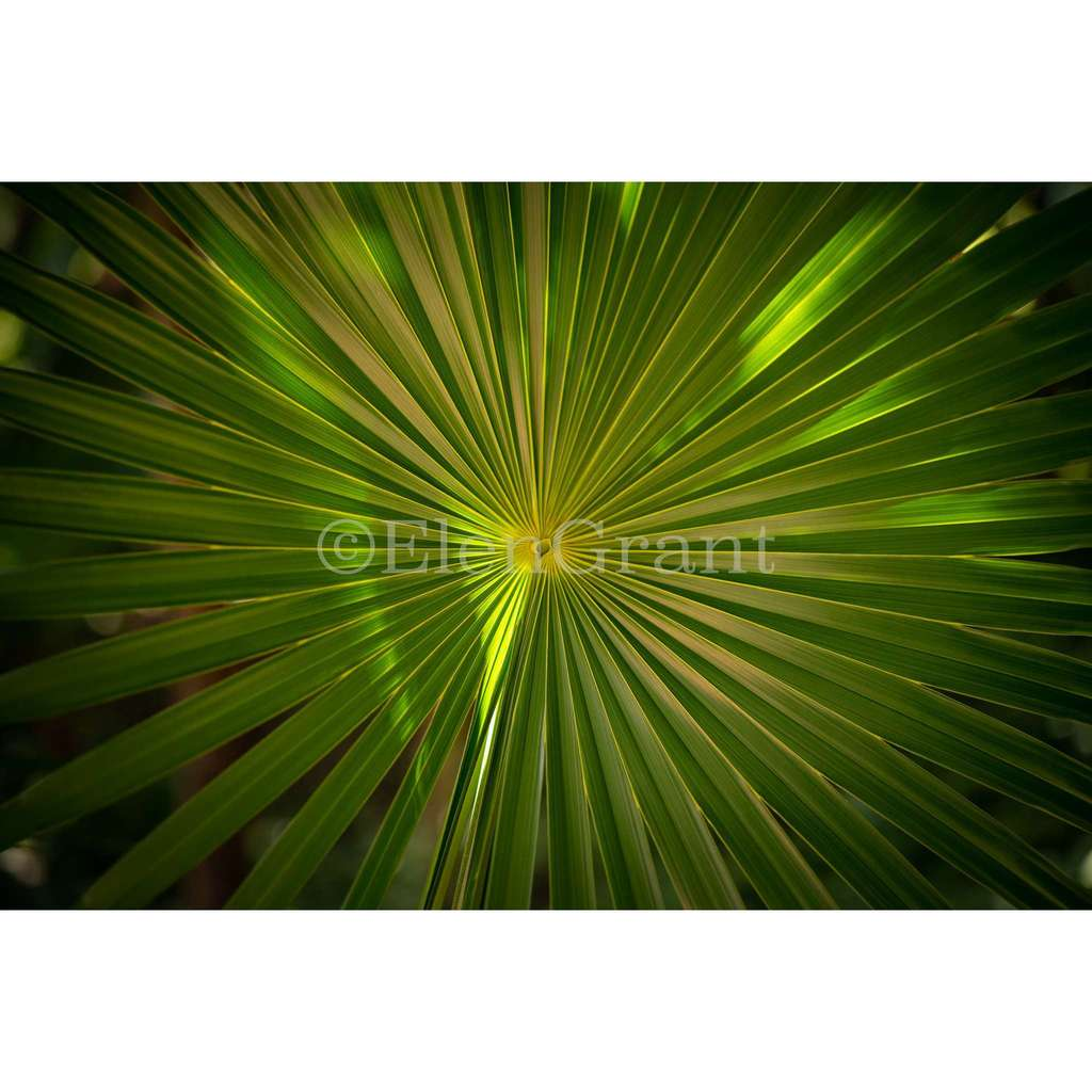 One palm leaf frontally macro