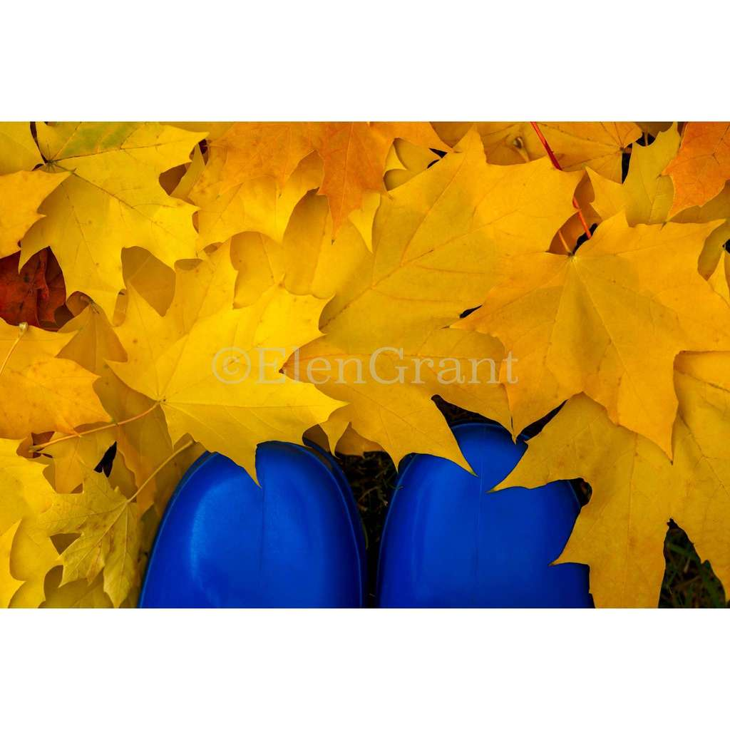 Colorful fall foliage and blue boots.