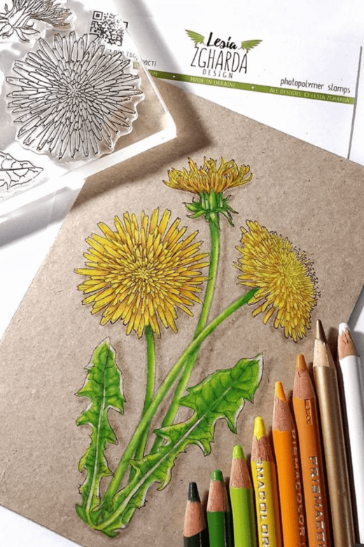 Greeting card flower design with dandelion flowers stamp set by Lesia Zgharda clear stamp. Stamps coloring with pencils PRISMACOLOR.